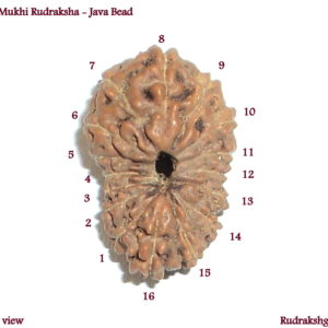 Collector 16 Mukhi Beads