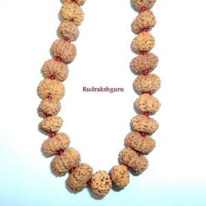 11 Mukhi Ekadash Rudra Mala