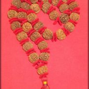 7 Mukhi Rudraksha Kantha - 33 Beads