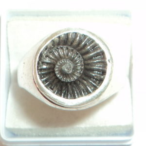 Sudarshan Shaligram Ring In Pure Silver