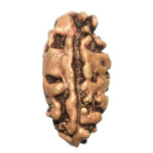 Collector 1 Mukhi Beads